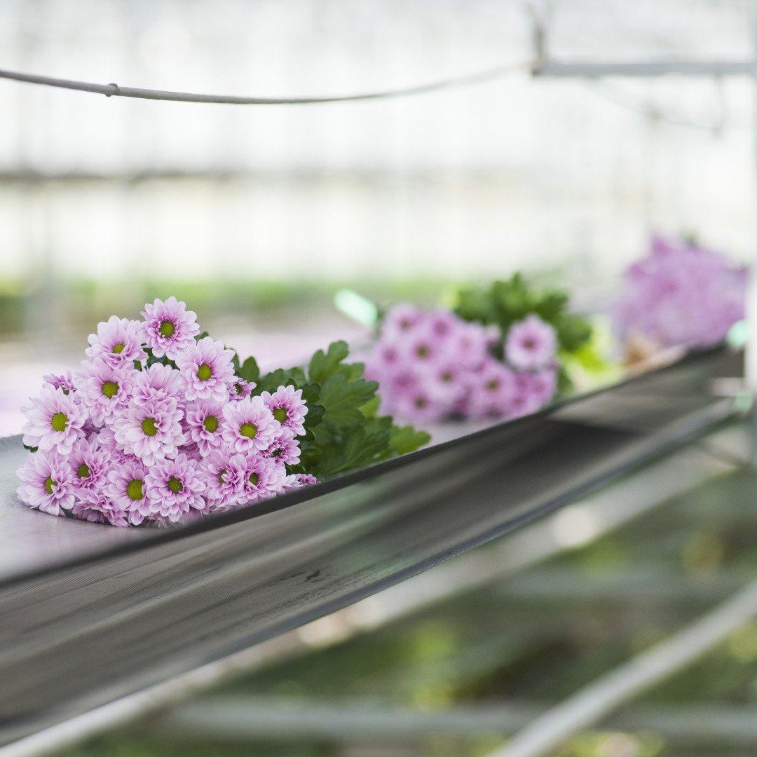 Zierpflanzenbau