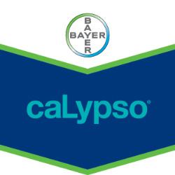 Calypso 480