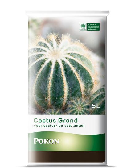 Cactusgrond