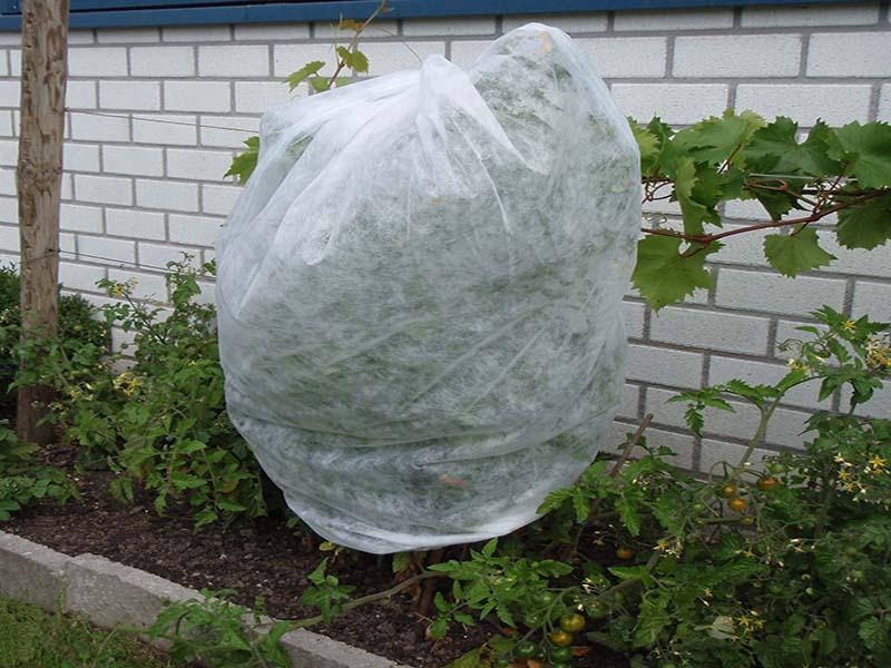 Tomatenvlies Tuba 0,75x10mt